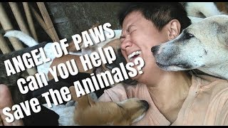 HELP US SAVE THE ANIMALS BY SUPPORTING OUR ANGEL OF PAWS CAUSE