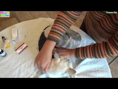 Стерилизация кошки и послеоперационный уход дома, не имея опыта, но по рекомендации ветврачей