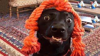 Смешные Коты и Собаки   🐱🐶 Подборка приколов с котами и собаками 🐈🐩   Смешно