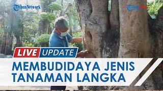Budidaya Pohon Langka, Pria di Kediri Ini Bisa Raup Keuntungan hingga Ratusan Juta
