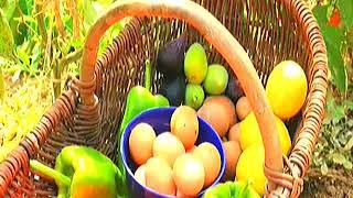 Video del alojamiento Casa do Figo