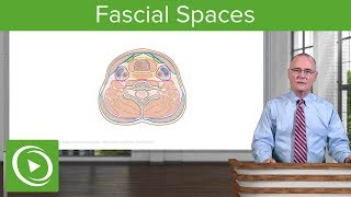 Fascial Spaces & Surgical Access to Trachea: Neck – Head and Neck Anatomy   Lecturio