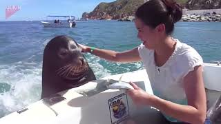 Sea Lion Hitches a Ride on Boat