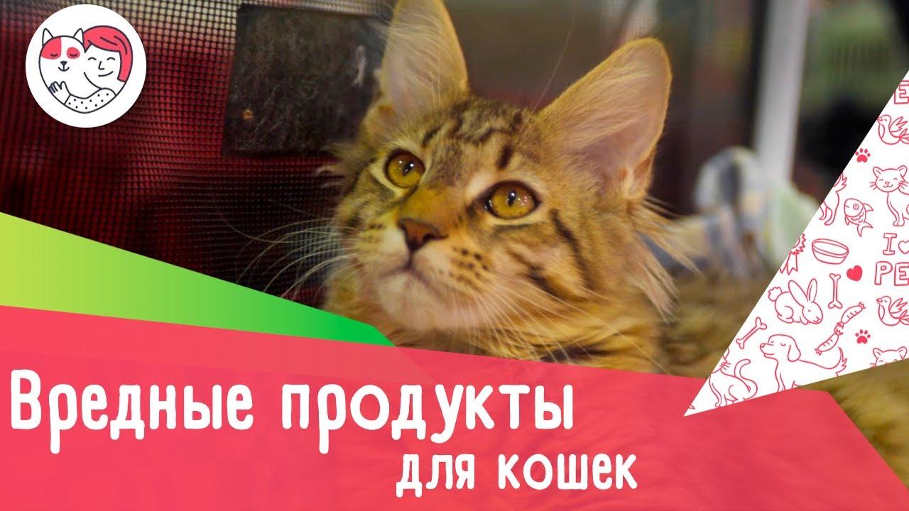 7 вредных для кошек продуктов