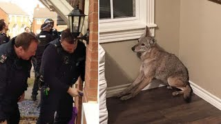 Woman is Forced to Call Police after Strange Creature Wanders into her Room