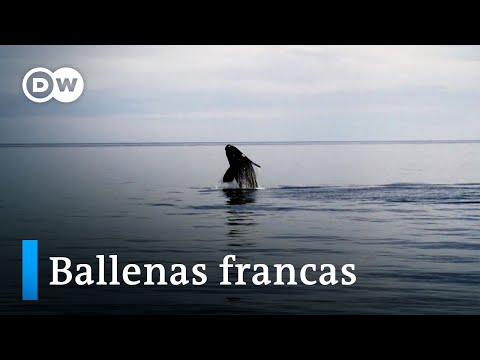 Iniciativas sustentables en Península Valdés