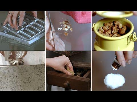 Sabia que é possível exterminar baratas sem veneno?