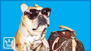 The REAL Story of the RICHEST DOG in the World