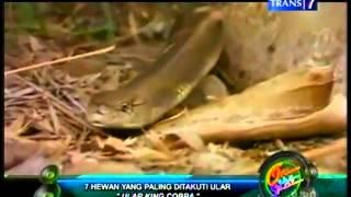 Download Video 7 hewan yg plg ditakuti ular MP3 3GP MP4