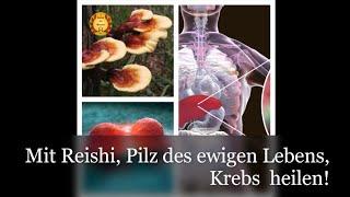 Reishi, der Pilz des ewigen Lebens! Wirksam auch bei Krebs!