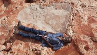 Dinosaur - Largest Dinosaur Footprint