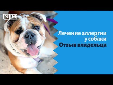 Лечение аллергии у собаки. Отзыв владельца