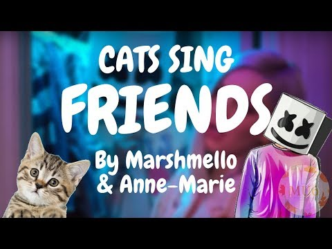 Cats Sing Friends by Marshmello & Anne-Marie | Cats Singing Song