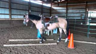 Bonnie's Journey - A Morgan Mare from broodmare to show horse