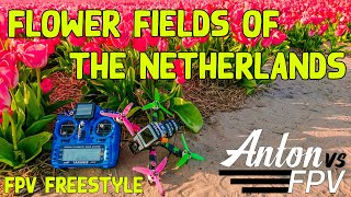 Flower fields of the Netherlands ???????????? | FPV Freestyle