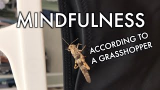 Mindfulness According To A Grasshopper | Shopping Swimwear at Target