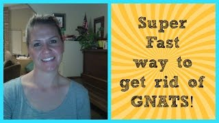 SUPER FAST way to get rid of GNATS!!!