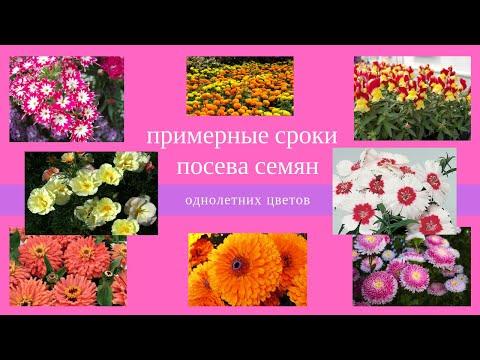 Сроки посева однолетних цветов. Какие цветы сеять на рассаду? Когда сеять цветы на рассаду?