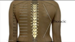 5C. Levels of Injury Explained - Thoracic - Spinal Cord Injury 101