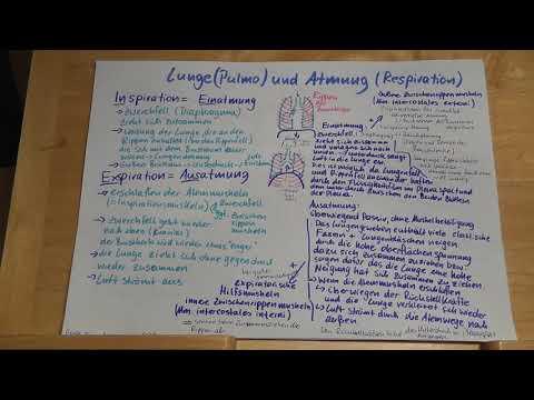 Arthrose des Kniegelenks und wie sie behandeln