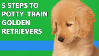 How To Potty Train Your Golden Retriever Puppy (5 Easy Steps)