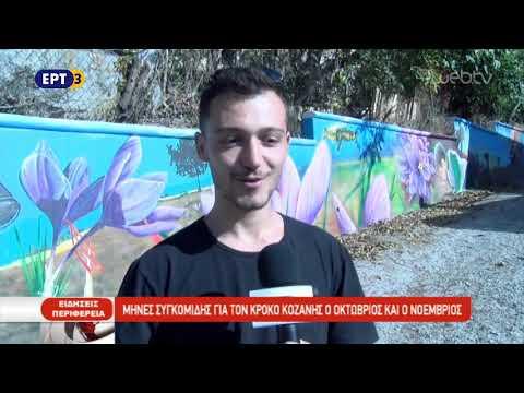 Μήνες συγκομιδής για τον κρόκο Κοζάνης ο Οκτώβριος και ο Νοέμβριος   ΕΡΤ