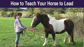 How to Teach Your Horse to Lead