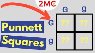 Punnett Square Basics | Mendelian Genetic Crosses