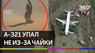 А-321 упал не из-за чайки: 360 изучил фауну Жуковского