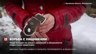 В Белоруссии недалеко от границы России волки держат в страхе несколько деревень