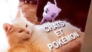 ماذا لو وقع بوكيمون في قبضة قطة حقيقية؟