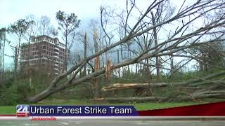Urban Forest Strike Team Begins Inspecting Tree Damage in Jacksonville