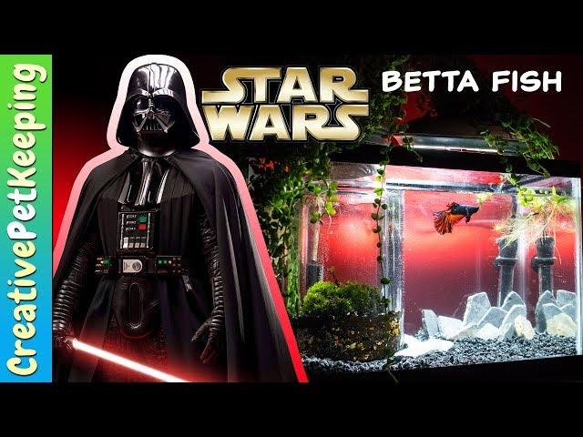 5 Gallon Betta Fish Tank Setup   Star Wars The Last Jedi Theme