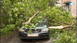 В Великом Новгороде на припаркованный автомобиль упало дерево