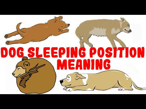What Does a Dog's Sleeping Position MEAN?