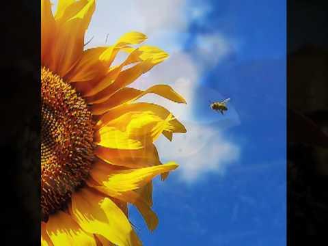 Coro a bocca chiusa (Humming Chorus) (Song) by Giacomo Puccini