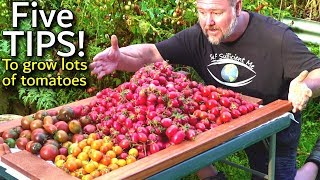 5 TIPS How To Grow A TON Of TOMATOES In One Long Raised Garden Bed Trellis