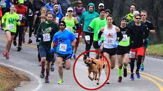 Dog accidentally joins half-marathon after mom lets her out for pee, finishes race in 7th place