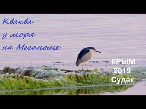 Кваква обыкновенная Nycticorax nycticorax в Крыму: Меганом, море на закате