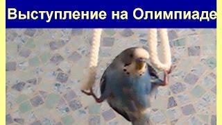 Выступление попугая Ричи на Олимпиаде