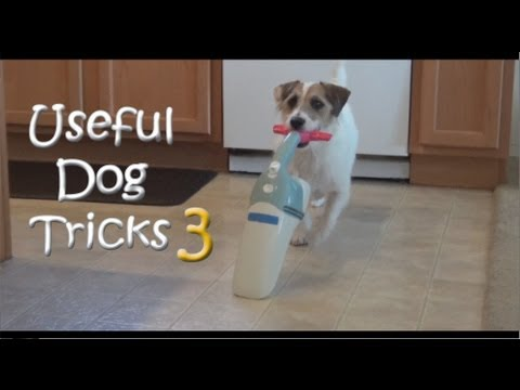 Grappige filmpjes humor kaarten, Presenting Useful Dog Tricks 3 Whoever said tricks cant be useful Jesses back and this funny humor