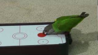 Kili Senegal Parrot Playing Air Hockey Trick