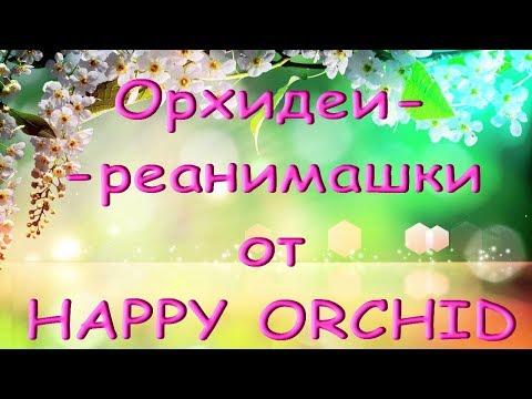 "ОРХИДЕИ-УЦЕНКИ от""Happy Orchid"" спустя 2,5 месяца."