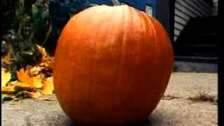 BlameSociety - The Life And Death Of A Pumpkin