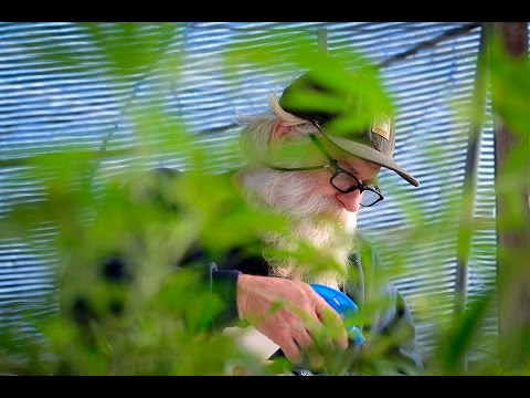Life of a cannabis farmer