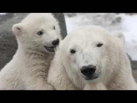 The Polar Bear Song (Soviet Songs in English)