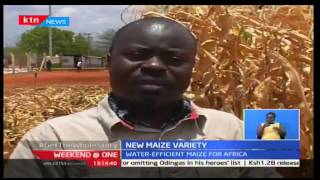 Weekend at One: New Maize variety in Kenya isn't affected by drought, 22/10/16