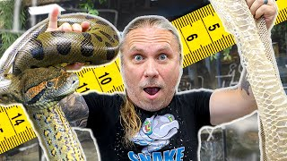 REAL ANACONDA VS ANACONDA SHED!! WHAT'S THE DIFFERENCE IN SIZE? | BRIAN BARCZYK