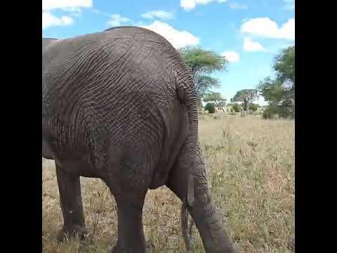 Tanzania Safaris and Kilimanjaro Tours