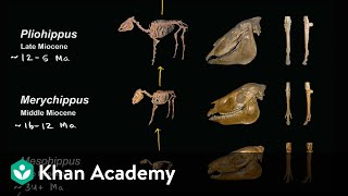 Evidence For Evolution  | Biology | Khan Academy